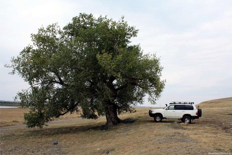 Большой машине большое дерево )))