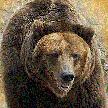 Медвепут