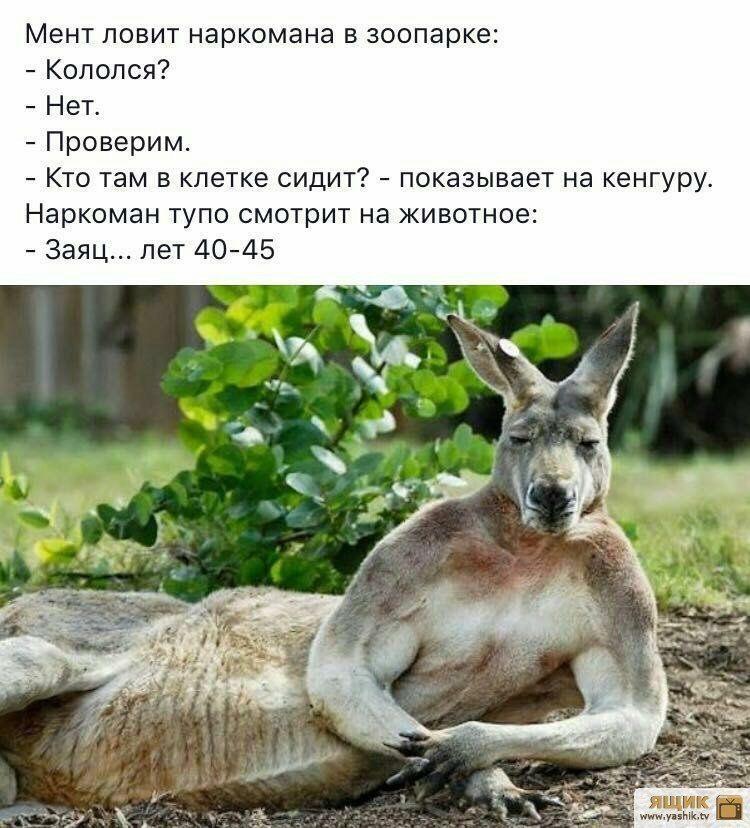 Анекдоты Наркоманов